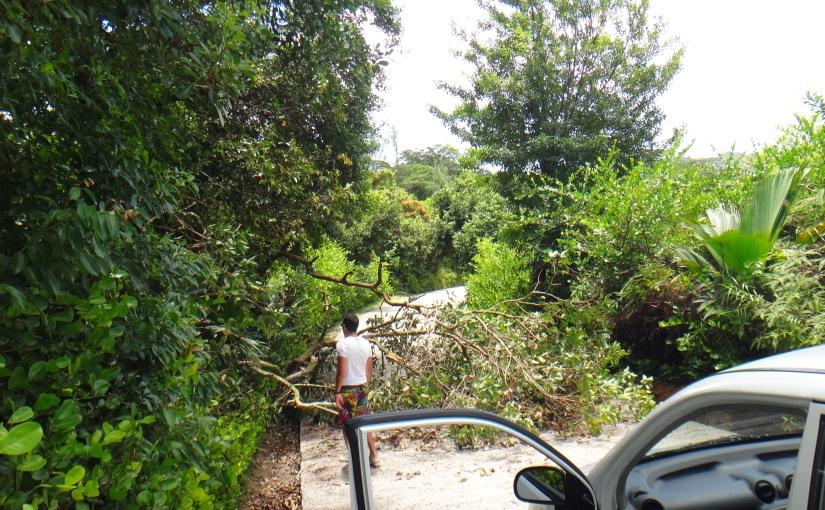 Aux Seychelles, un arbre se couche en travers de notreroute